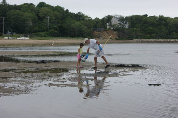 Digging Clams on Cape Cod