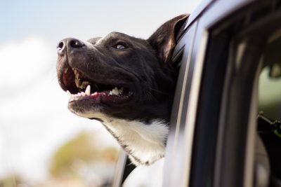 Moving Day Tips for Dog Lovers